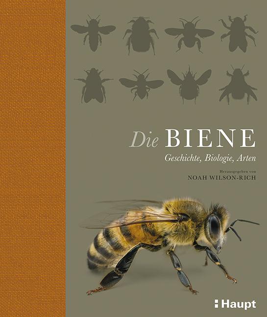 Rezension: Die Biene. Geschichte, Biologie, Arten