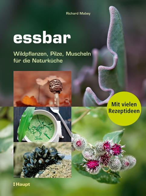 Rezension: essbar.  Wildpflanzen, Pilze, Muscheln für die Naturküche