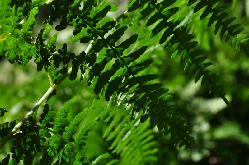 Prolog grüner Faden