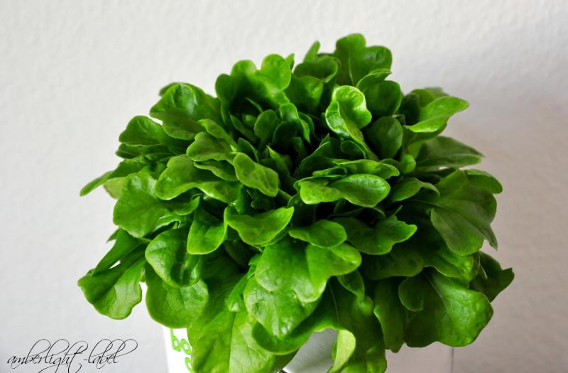 My Monday Mhhhhhh: BottleCrop – der Salat aus der Flasche