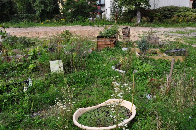 Urban gardening in Löbtau: Columbusgarten