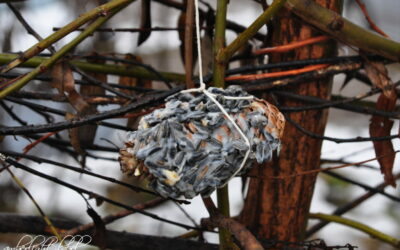 Vogelfutter DIY Wintervogelfutter Basteln mit Kindern Tannenzapfen