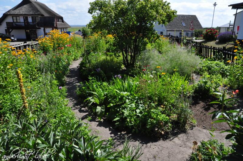 Bauerngarten & Blumensamen