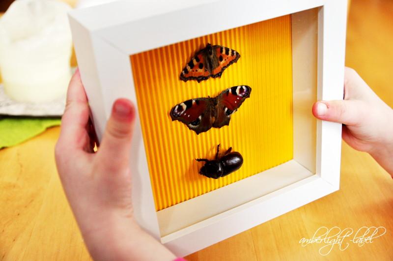 Wanddeko: Insektenkasten