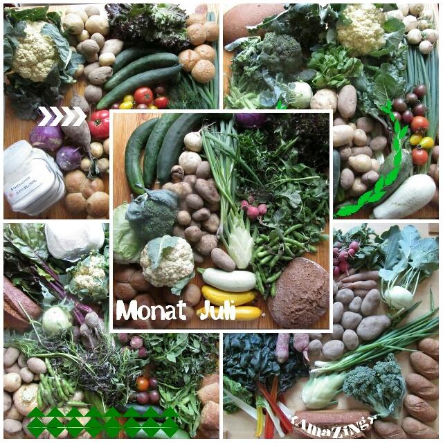 Solidarische Landwirtschaft Schellehof Juli 2015